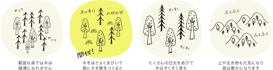 窮屈な森では木は健康になれません 木をほどよくまびいて森にすき間をつくると たくさんの日光をあびて木はすくすく育ち 森は豊かになります
